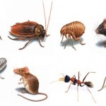 The Problem with Pests