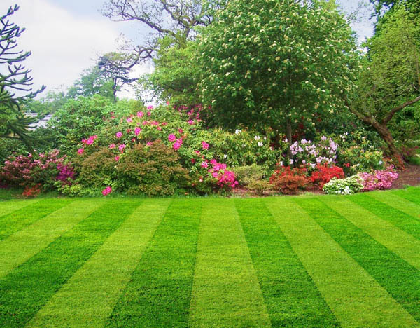 Scranton Pennsylvania Lawn Care