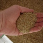 Lawn Care Tip: Sod over Seed