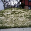 Snow Mold and What it Means For Your Lawn