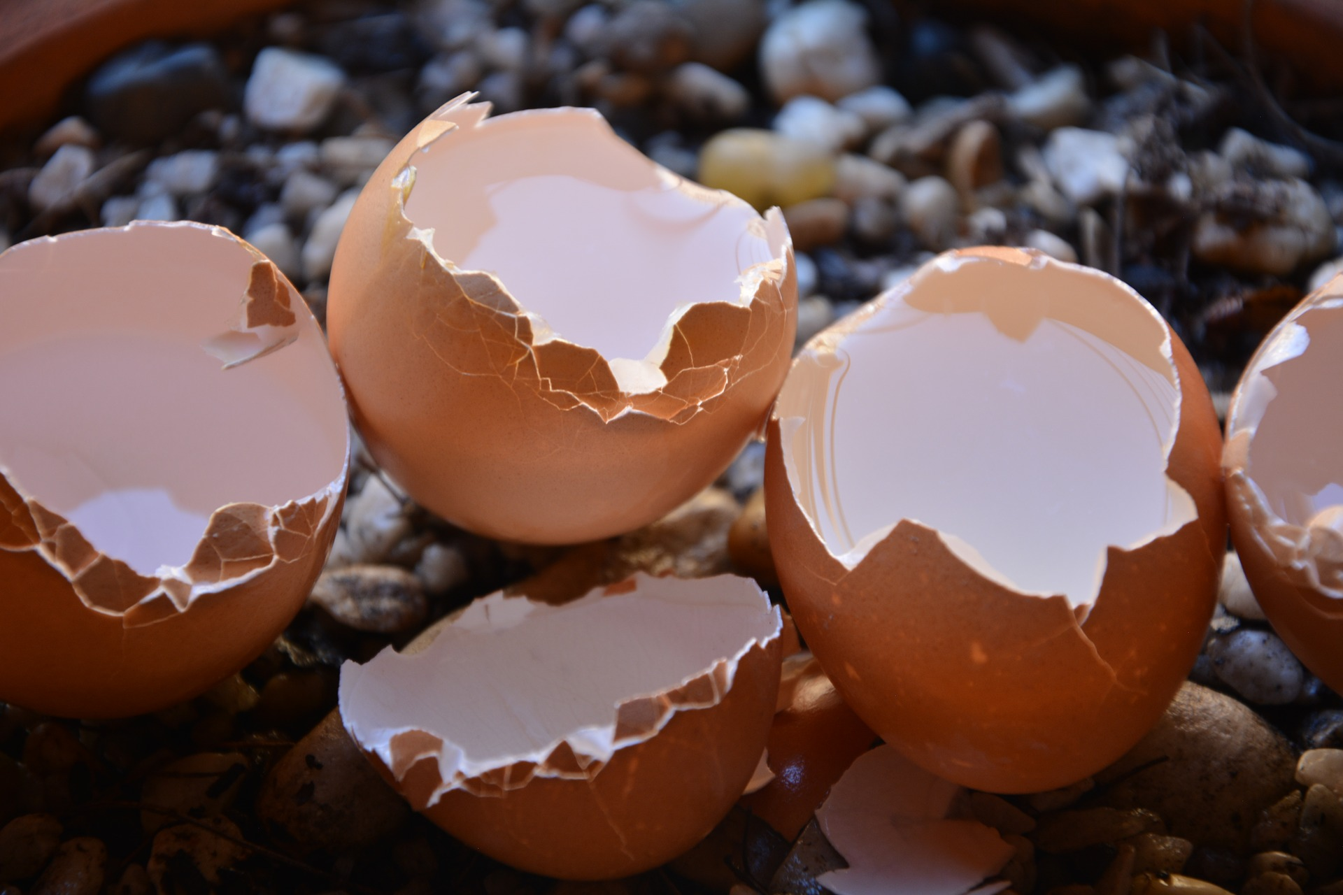 Eggshells In The Garden