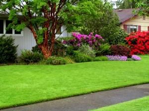 Green Lawn Care: Fertilizing