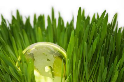 Choosing Organic Lawn Care