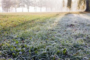Prepare Your Lawn: Winter Lawn Care