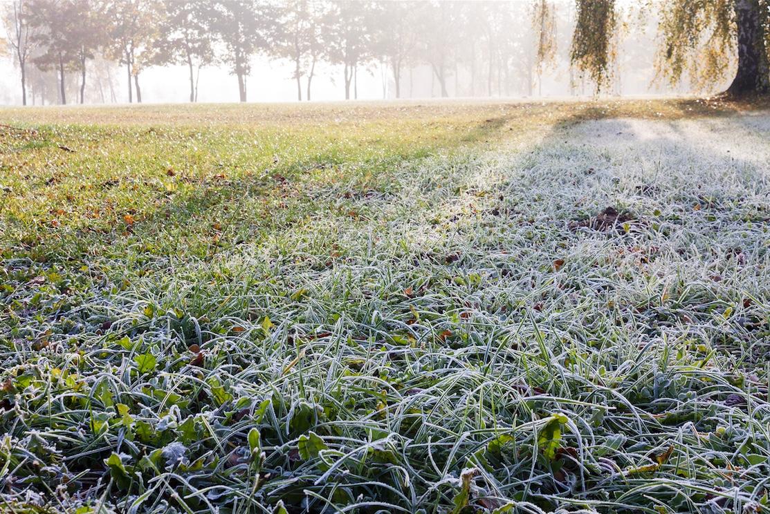 Prepare Your Lawn: Winter Lawn Care