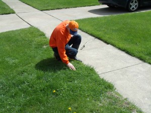 Allentown Lawn Care