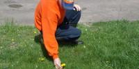 service area lawn care nepa