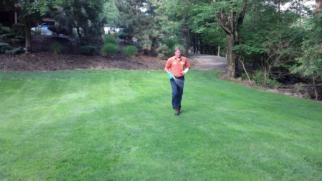 5 Lawn Maintenance Tips for a Greener Lawn!