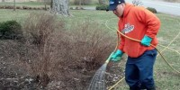 Louis Mulch Bed Weed Control 4