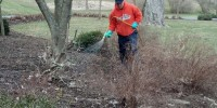 Louis Mulch Bed Weed Control 5