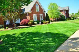 Top 6 Summer Lawn Care Tips