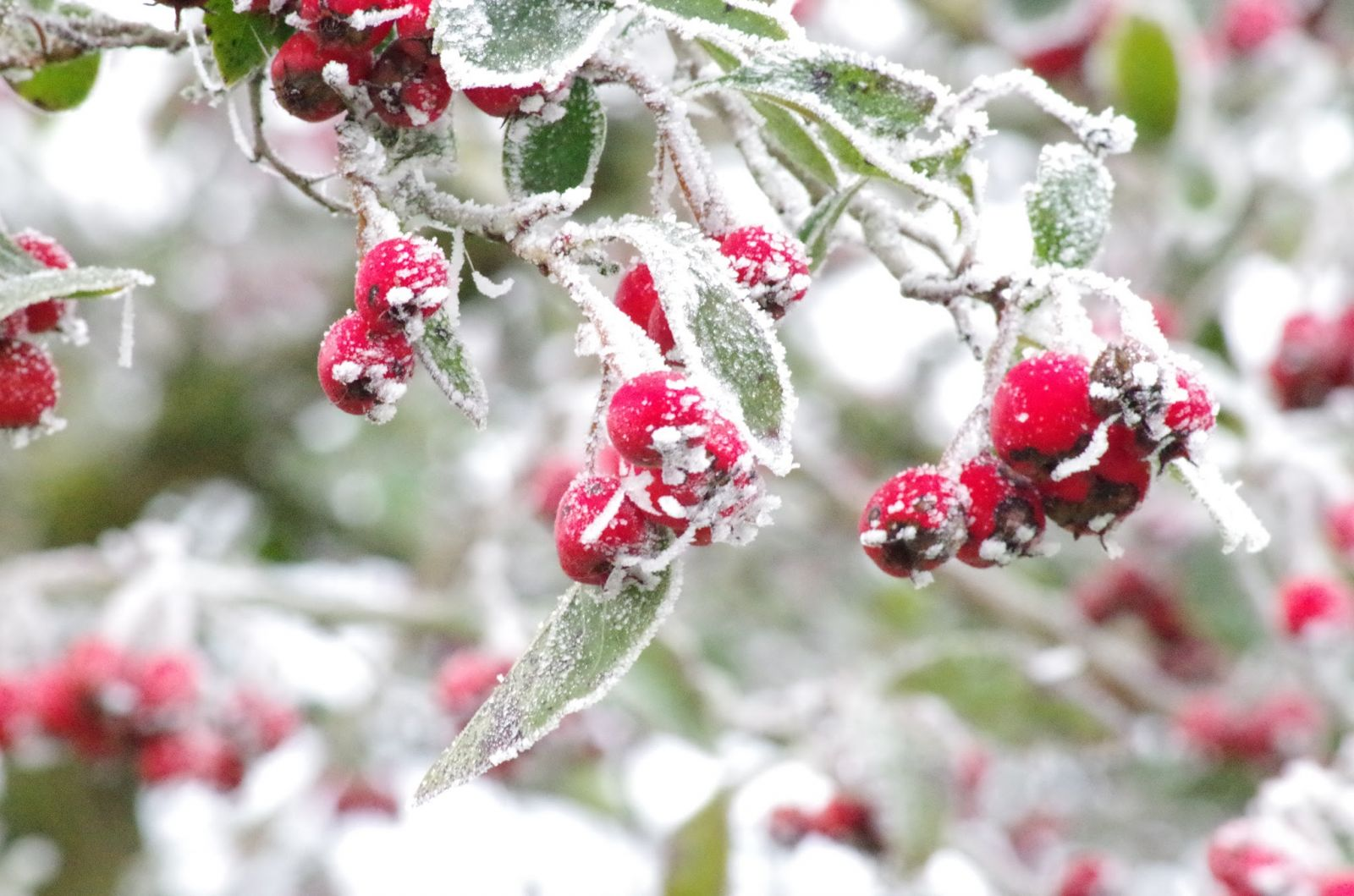 Brighten Up Your Winter Landscape With Color
