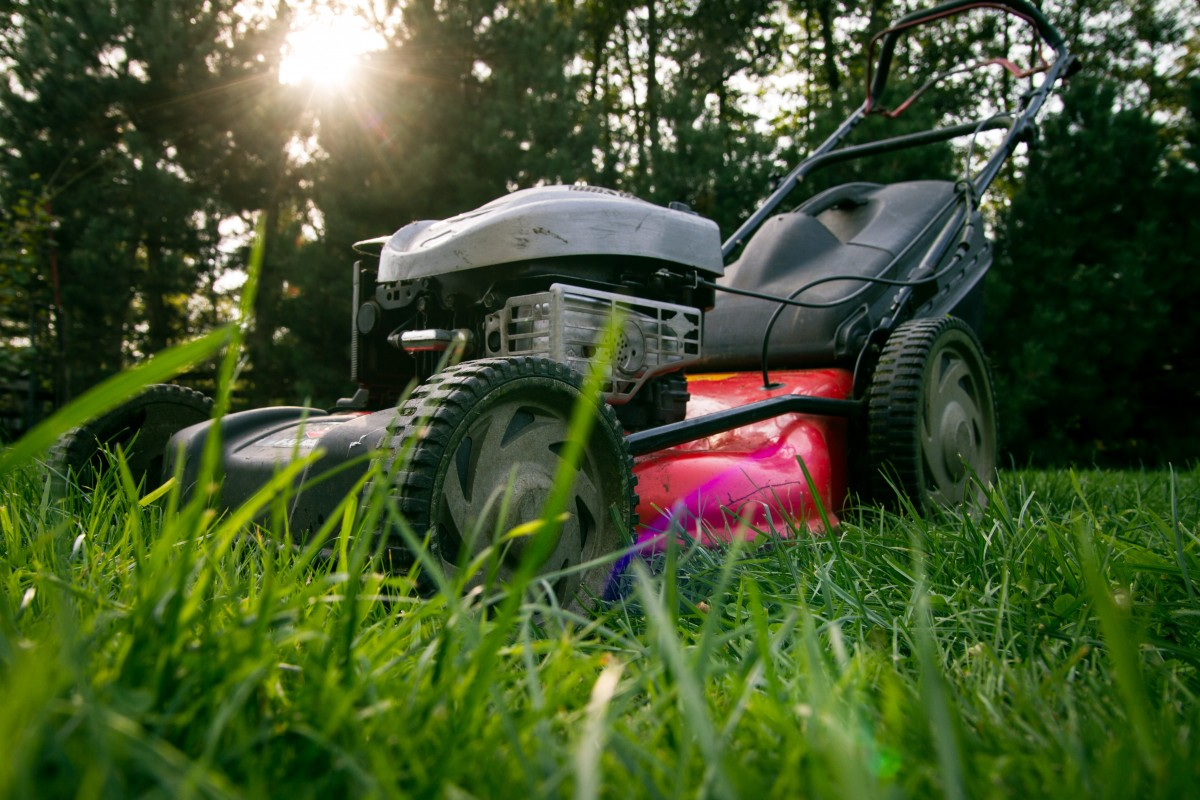 6 Money-Saving Tips On Lawn Care