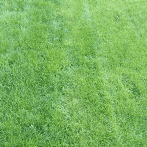 The Don'ts Of Maintaining A Good Lawn At Home