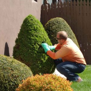 Honesdale Lawn Care
