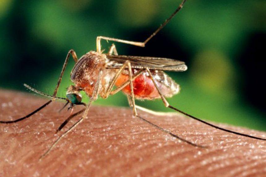 Pest & Bug Control