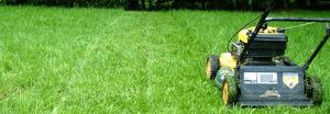 Grasshopper Lawns | Lawn Care Services