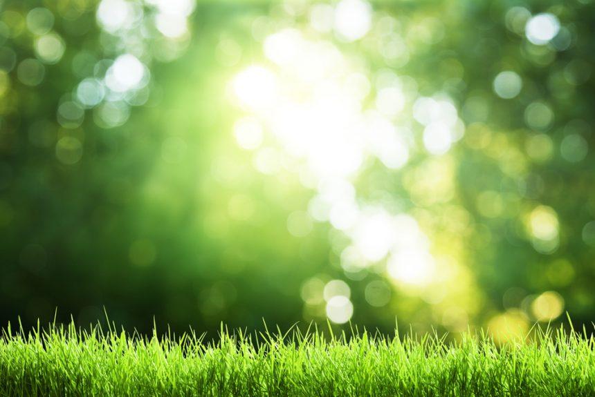 Grasshopper Lawn's Spring Lawn Care Service Checklist