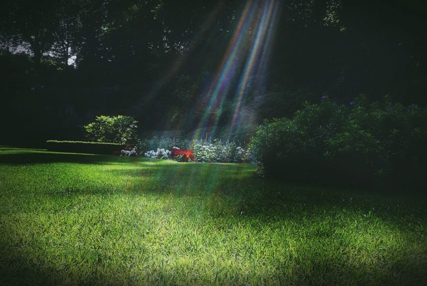 Important Summer Lawn Care Tips 2020