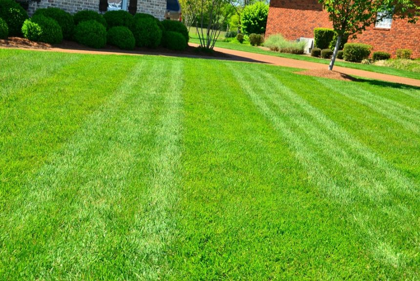 Why You Need a Lawn
