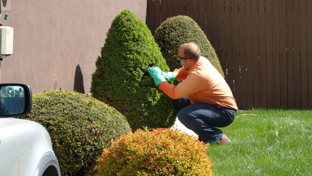 TREE AND SHRUB CARE AND SERVICE
