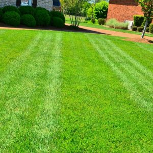 Significance of Lawn Care for the Environment