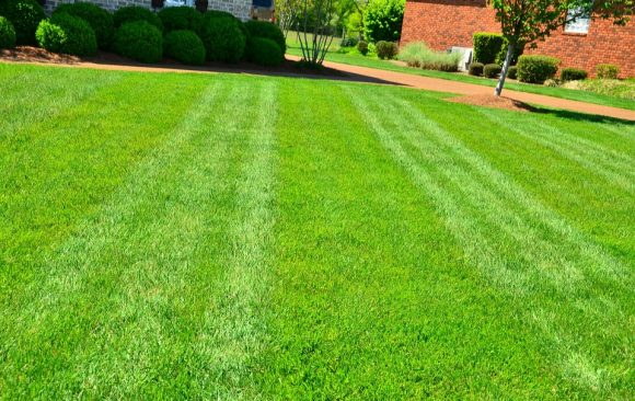 Lawn Care, Dry Spots And Soil Compaction
