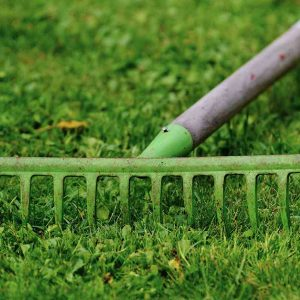 Important Tools And Tasks Associated With Proper Lawn Care